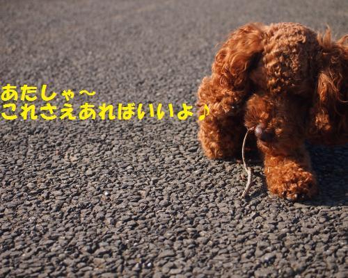 141_convert_20121106024534.jpg