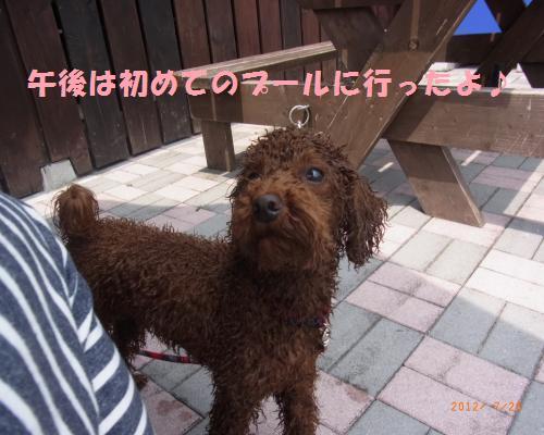 145_convert_20120729223106.jpg