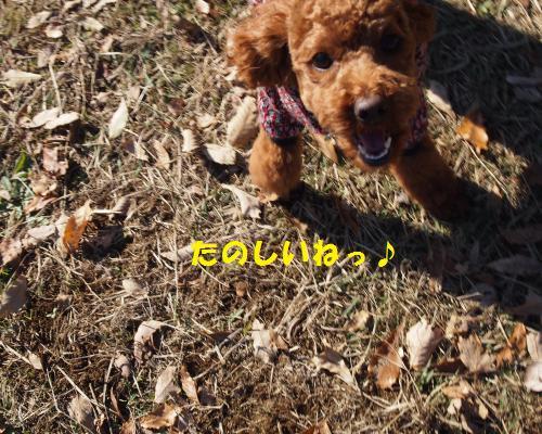 145_convert_20121209120318.jpg