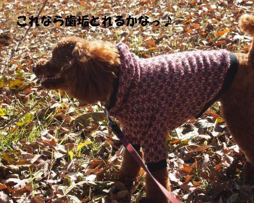 156_convert_20121209120450.jpg