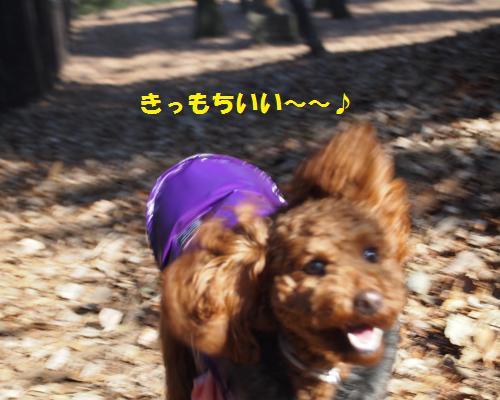 156_convert_20130112221937.jpg