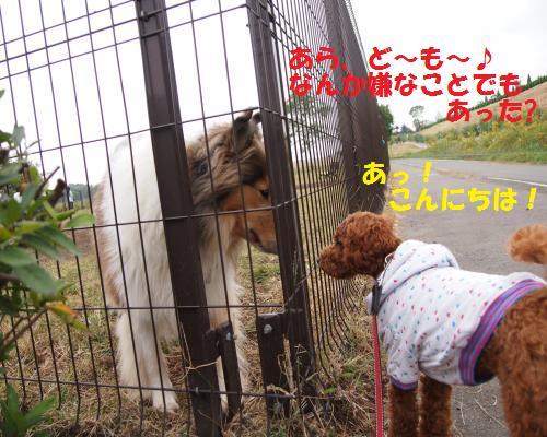 157_convert_20121028085848.jpg