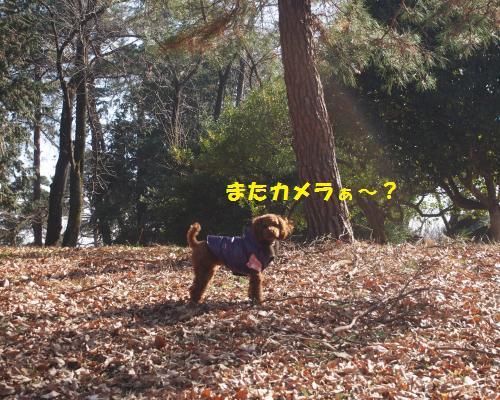 158_convert_20130112222123.jpg