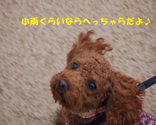 159_convert_20121123102047.jpg