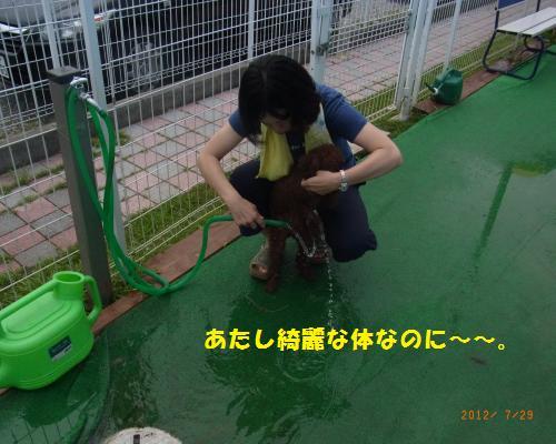 162_convert_20120730215458.jpg