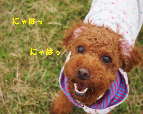 171_convert_20121127021252.jpg