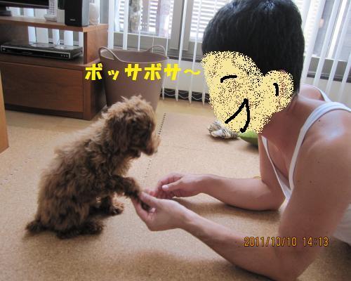 172_convert_20120913204544.jpg