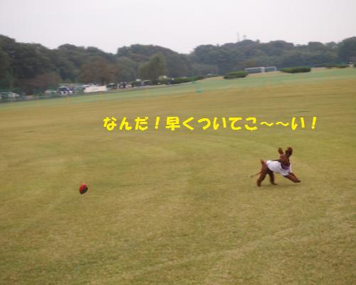 189_convert_20121028090845.jpg
