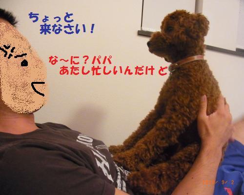 198_convert_20120902222015.jpg
