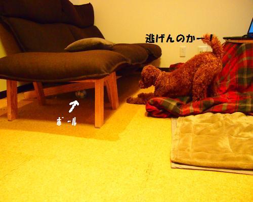 202_convert_20130217203555.jpg