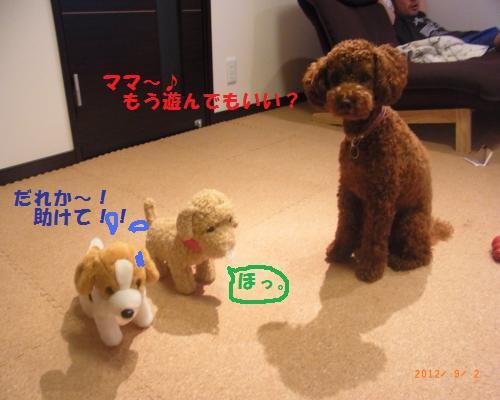208_convert_20120902221444.jpg