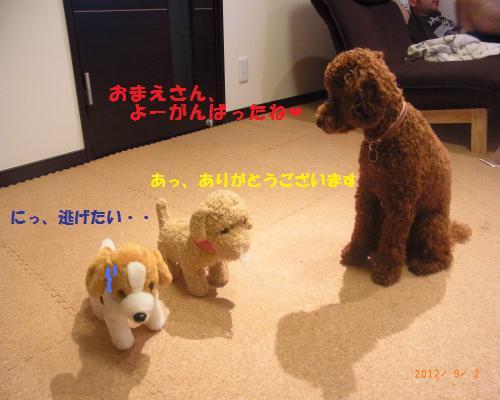 210_convert_20120902221145.jpg