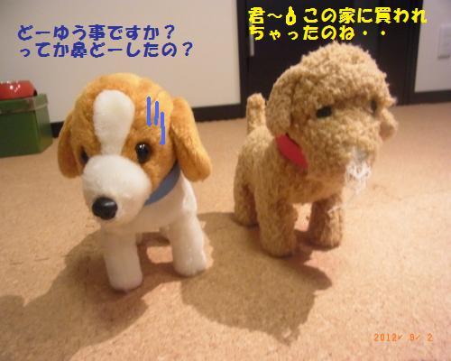 213_convert_20120902220951.jpg