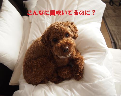 221_convert_20130302100526.jpg