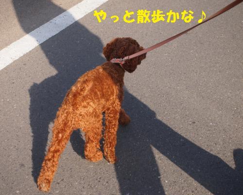 228_convert_20121106025215.jpg