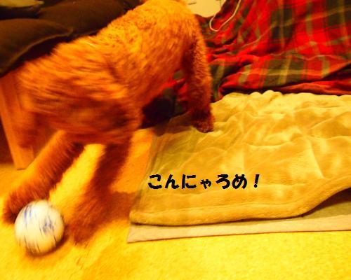 270_convert_20130217204151.jpg