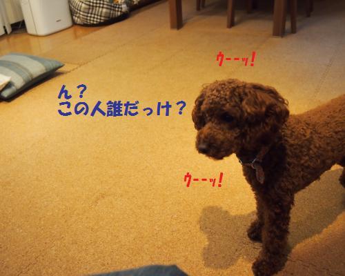 279_convert_20121110124911.jpg