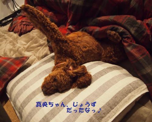 315_convert_20121231210900.jpg