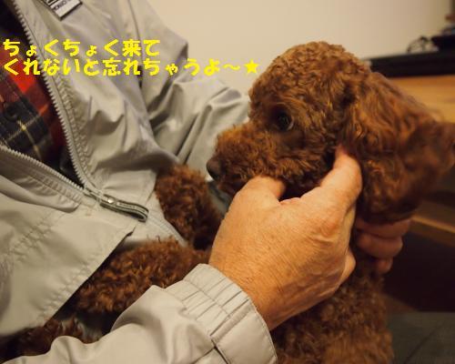 360_convert_20121110124645.jpg