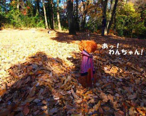 392_convert_20121209121806.jpg