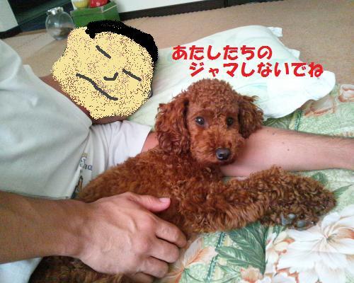 DSC_0203_convert_20120904201942.jpg