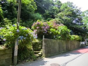CIMG1931 201306鎌倉