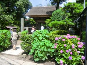CIMG1940 201306極楽寺