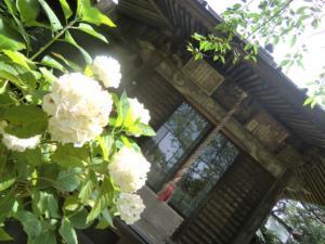 CIMG1953 201306極楽寺