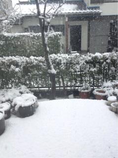 2013114雪