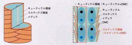 kouzou1.jpg