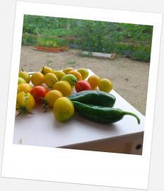 20130712本日の収穫