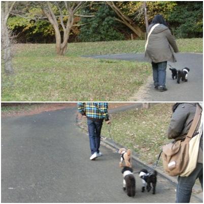 お散歩、これだけ・・・