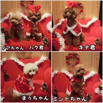 クリスマス衣装を着て