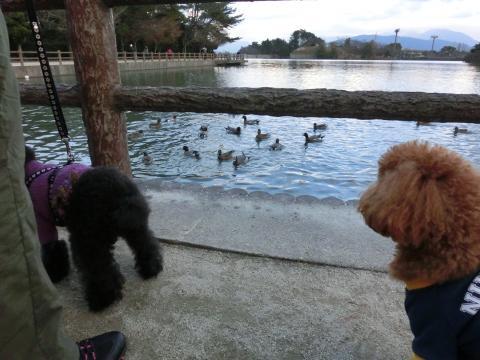 お池のココア