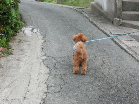 ご近所お散歩2