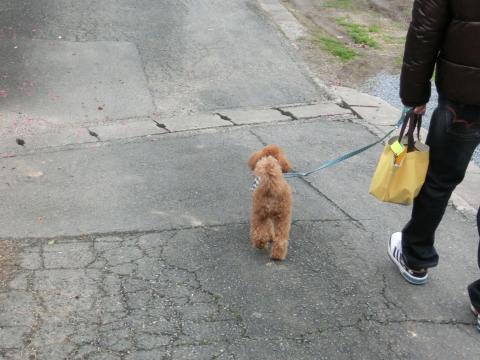 ご近所お散歩3