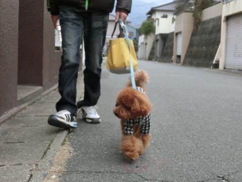ご近所お散歩4