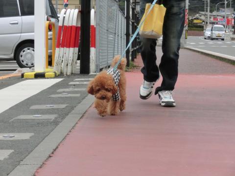 ご近所お散歩6