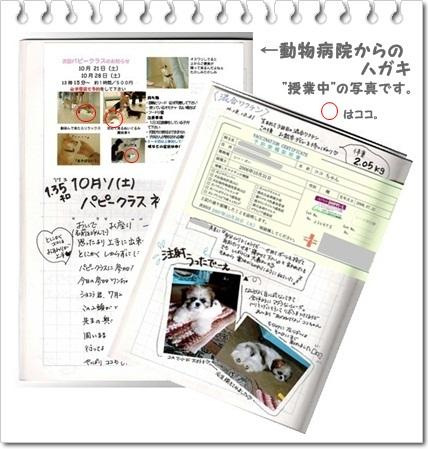 ちびココ日記3