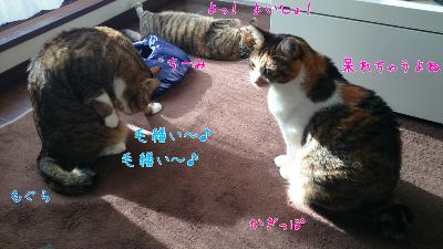edit_2014-01-23_12-42-01-664.jpg