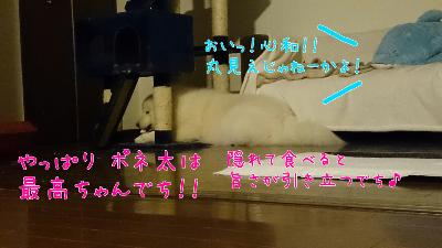 edit_2014-01-24_12-44-00-553.jpg