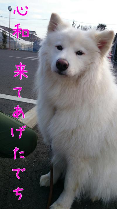 edit_2014-02-02_15-05-12-439.jpg
