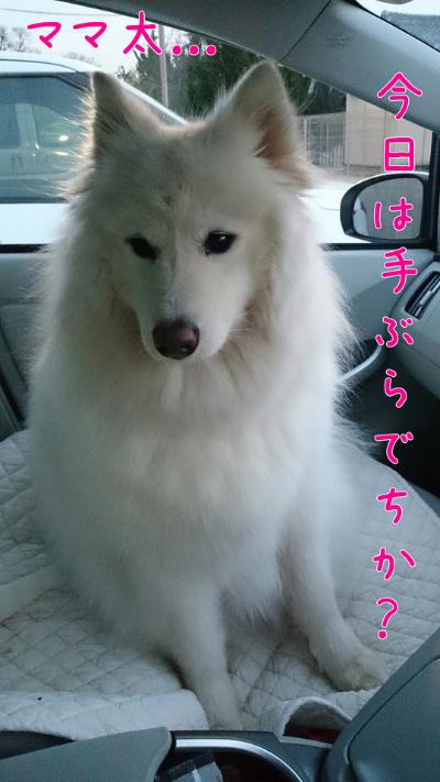 edit_2014-02-03_17-50-09-264.jpg