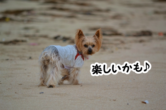 初体験の砂浜散歩♪