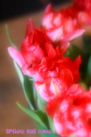春のかわいい花