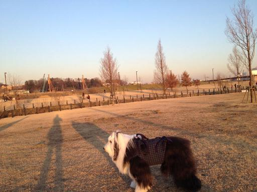 新横 公園散歩