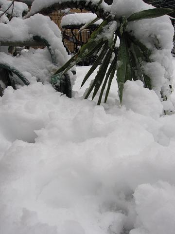 雪の重さに