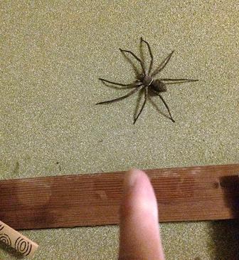 でかい蜘蛛さん