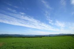 風景 平原