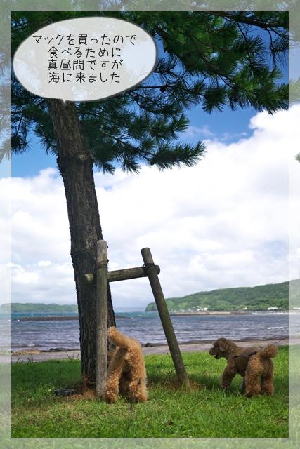 虎太郎の夏03